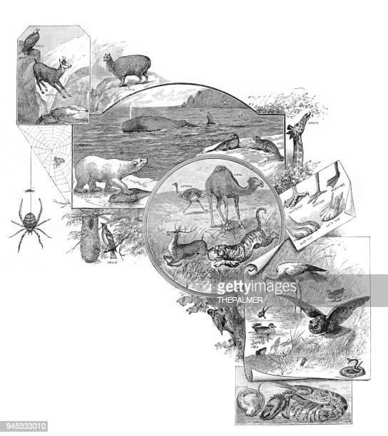 Temas de animales grabado 1892