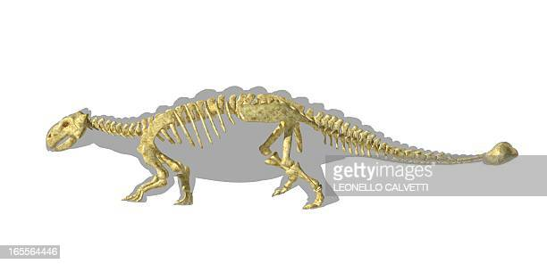 Ankylosaur dinosaur skeleton, artwork