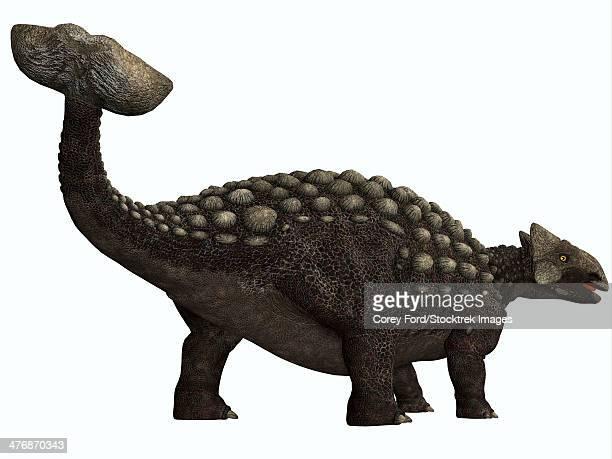 ilustraciones, imágenes clip art, dibujos animados e iconos de stock de ankylosaurus, a heavily armored herbivore dinosaur from the cretaceous period. - paleobiología