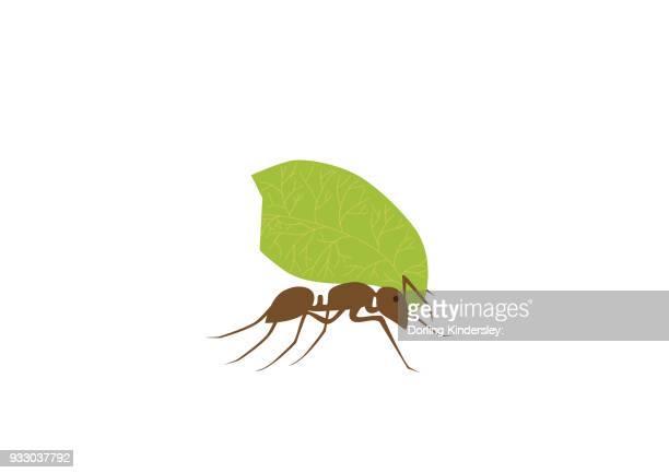 ilustraciones, imágenes clip art, dibujos animados e iconos de stock de ant carrying leaf - hormiga