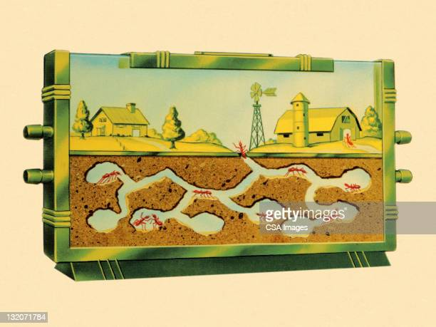 ilustraciones, imágenes clip art, dibujos animados e iconos de stock de granja de hormigas - hormiga