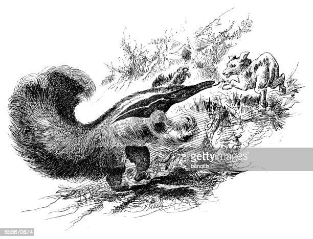 anteater going after dog - giant anteater stock illustrations