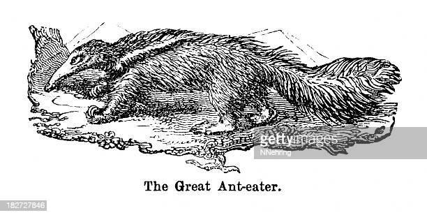 Urso-formigueiro-gigante