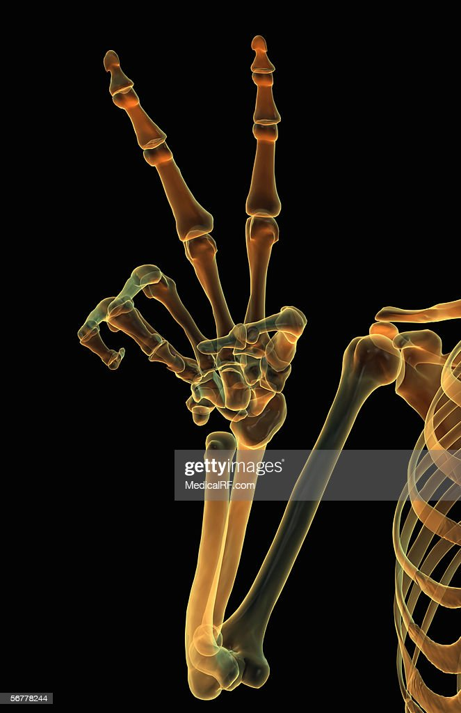 Anterior View Of A Glowing Xray Skeletal Hand Making A Gesture Stock
