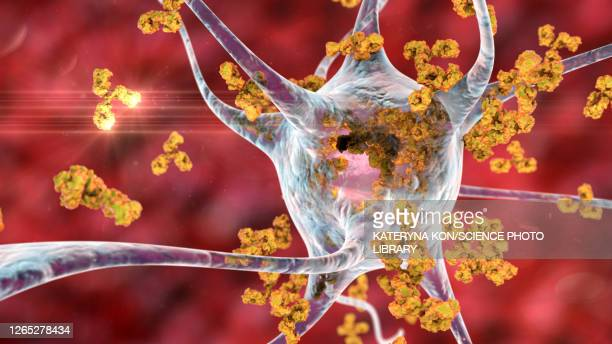 antibodies attacking neurons, conceptual illustration - autoimmunity stock illustrations