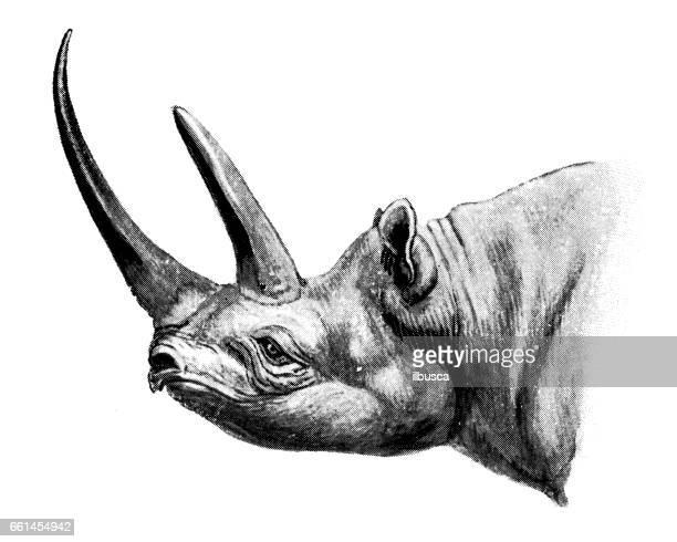 antique animals illustration: black rhinoceros - horned stock illustrations