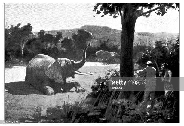 antique animals illustration: elephant hunting - mammal stock illustrations, clip art, cartoons, & icons