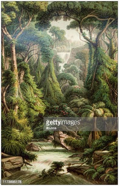 antique botany illustration: sri lanka forest - archival stock illustrations