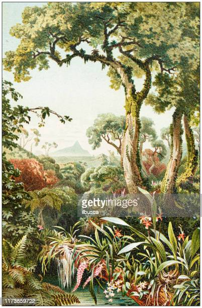 antique botany illustration: tropical parasitic plants - archival stock illustrations