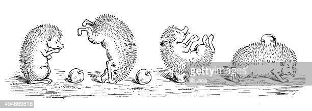 Antique children's book comic illustration: hedgehog with apple