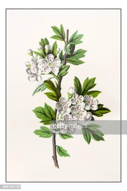 Ilustraciones de Stock y dibujos de Le Mayflower | Getty Images