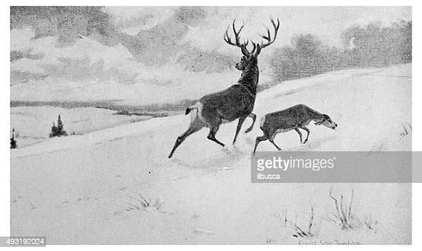 Ponto antigo ilustração de impressão: Vida selvagem e caçadores no Inverno