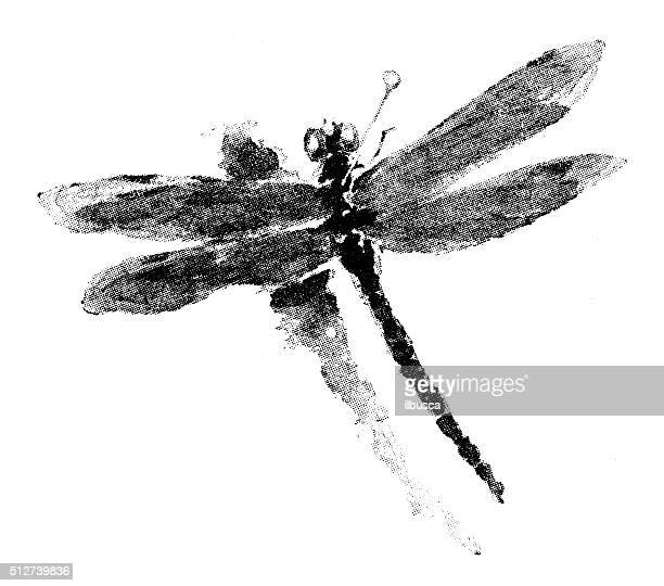 Antique dotprinted watercolor illustration of Japan: dragonfly