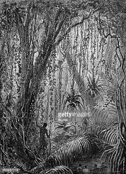 Antique engraved image of man in jungle