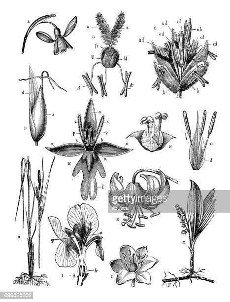 Antique engraving illustration: Flowers
