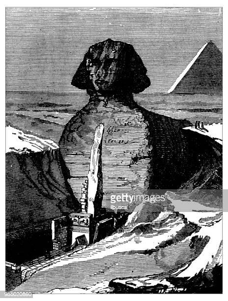 antique engraving illustration: great sphinx - the sphinx stock illustrations, clip art, cartoons, & icons