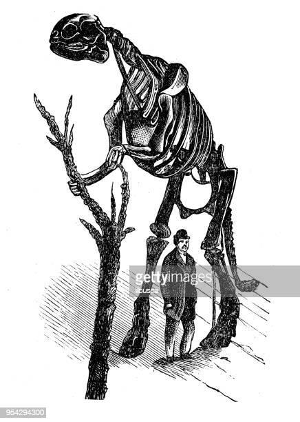 antique engraving illustration: hadrosaurus - hadrosaurid stock illustrations, clip art, cartoons, & icons