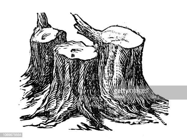 antique engraving illustration: tree stump - tree trunk stock illustrations, clip art, cartoons, & icons