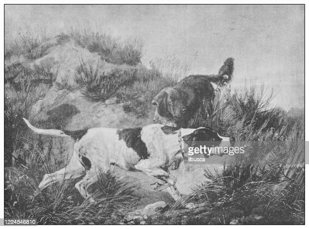 antique famous painting from the 19th century: pointer and setter by c f deiker - pointer dog stock illustrations