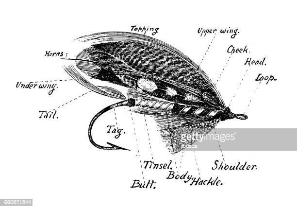 illustrations, cliparts, dessins animés et icônes de antique illustration sports et loisirs: saumon appât mouche - saumon