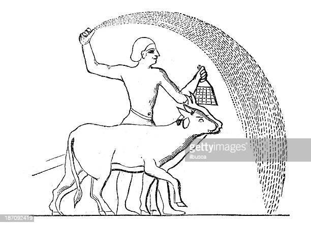 illustrations, cliparts, dessins animés et icônes de ancienne illustration: l'agriculture phases (série d'illustrations) 11 - femme africaine