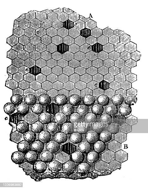 antique illustration: beekeeping honeycomb - worker bee stock illustrations