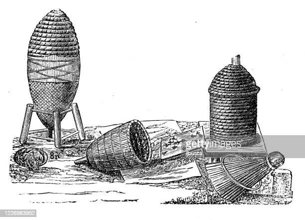 antique illustration: beekeeping - worker bee stock illustrations
