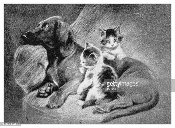 antique illustration: dog and kittens - young animal stock illustrations, clip art, cartoons, & icons