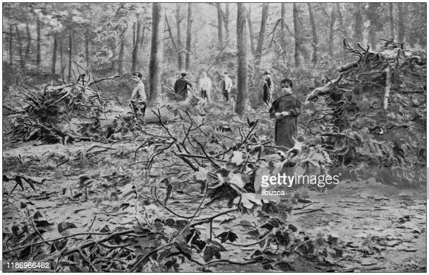 ilustrações de stock, clip art, desenhos animados e ícones de antique illustration: forest destruction by natural disaster - desmatamento