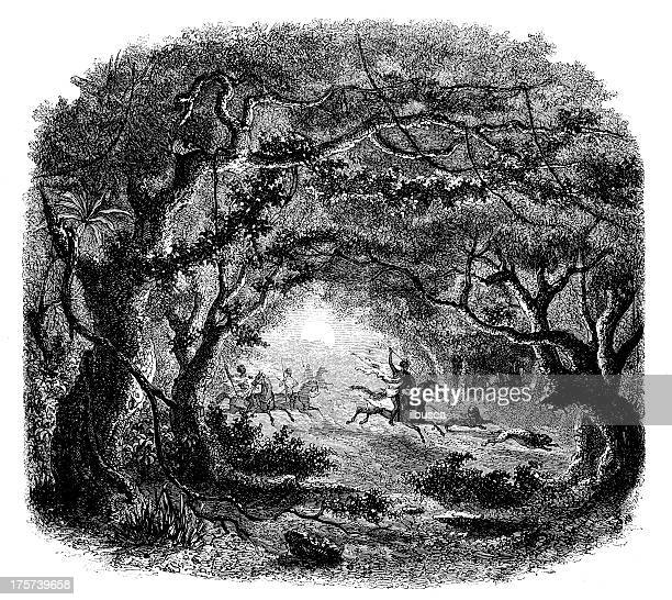 antique illustration of abyssinia forest jungle hunting - ethiopia stock illustrations, clip art, cartoons, & icons
