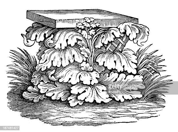 Antique illustration of Acanthus (ornament)