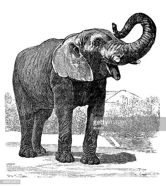 ilustrações de stock, clip art, desenhos animados e ícones de antiguidade ilustração de elefante africano - elefante