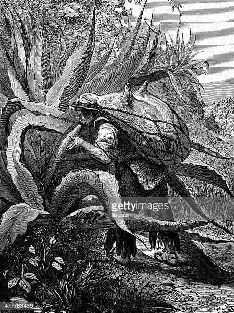 Antiguidade ilustração de agave pulque Colher