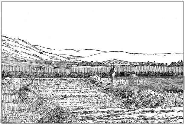 """illustrazioni stock, clip art, cartoni animati e icone di tendenza di antique illustration of agricultural field - """"ilbusca"""""""