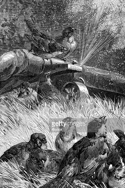 Antique illustration of birds on water sprinkler
