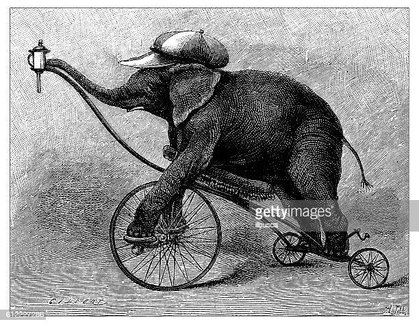 ilustrações de stock, clip art, desenhos animados e ícones de antique illustration of circus elephant - elefante