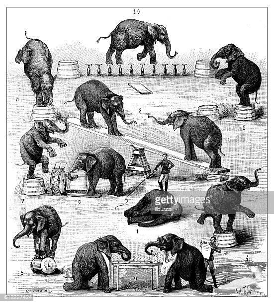 Antique illustration of circus elephant