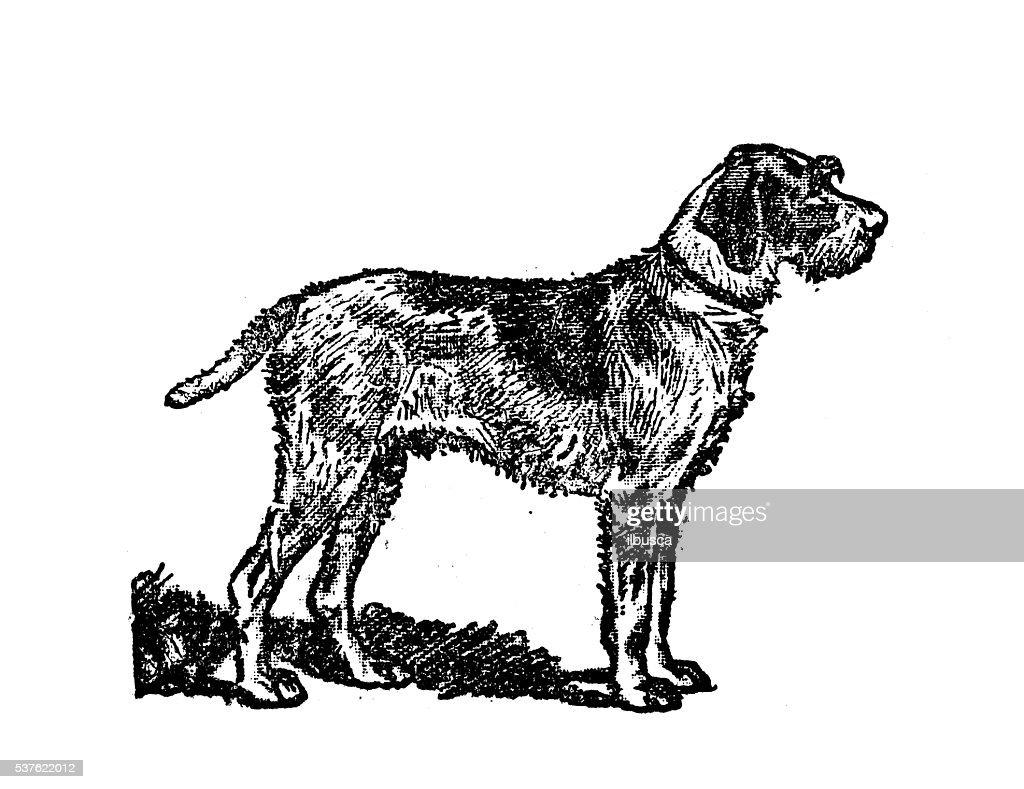 Antique Illustration Of Dog Stock Illustration   Getty Images