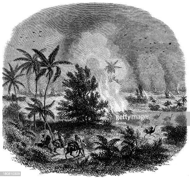 antique illustration of fire in brazil - savannah stock illustrations, clip art, cartoons, & icons