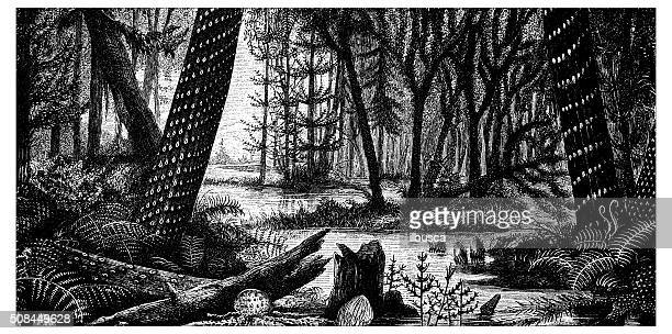 Antique illustration of forest with swamp