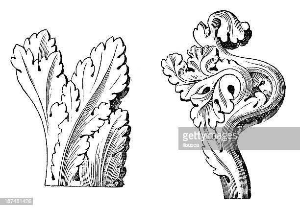 アンティークのイラストのゴシック Acanthus (オーナメント)