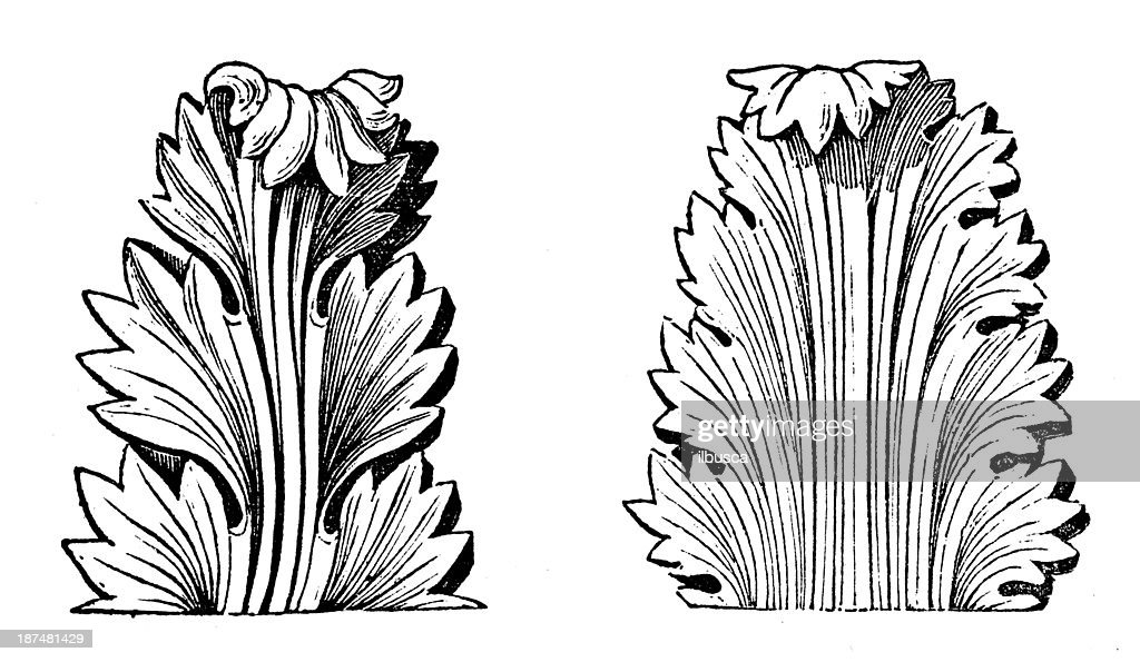 Antique illustration of Greek Acanthus (ornament) : stock illustration