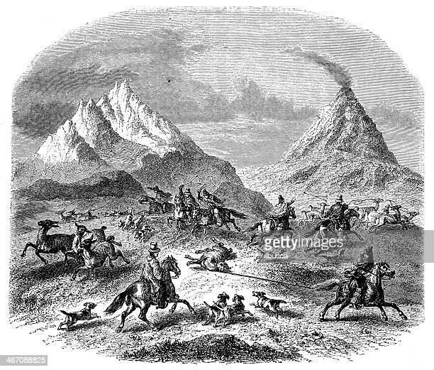 Antique illustration of guanacos hunting in Chile