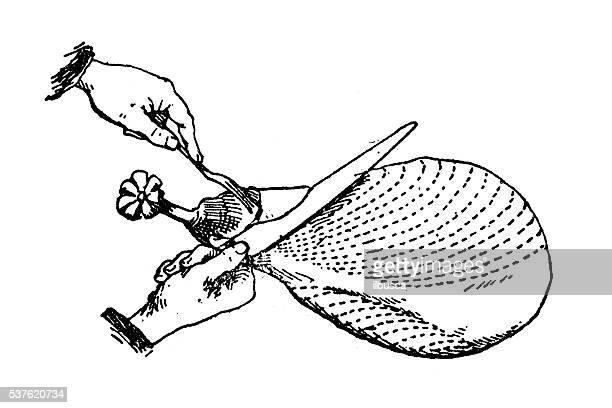 Antique illustration of hands cutting ham