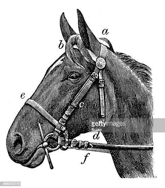 antique illustration of horse rein - horse stock illustrations