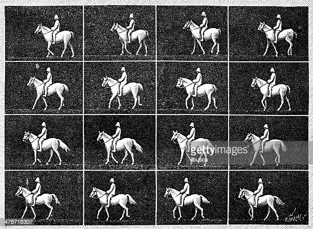 antique illustration of horse walking - multiple image stock illustrations, clip art, cartoons, & icons