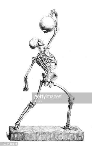 antique illustration of human body anatomy: human skeleton - cardiopulmonary system stock illustrations, clip art, cartoons, & icons