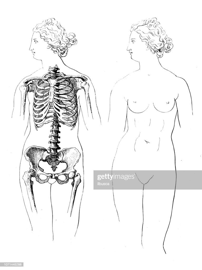 Antique Illustration Of Human Body Anatomy Woman Stock Illustration