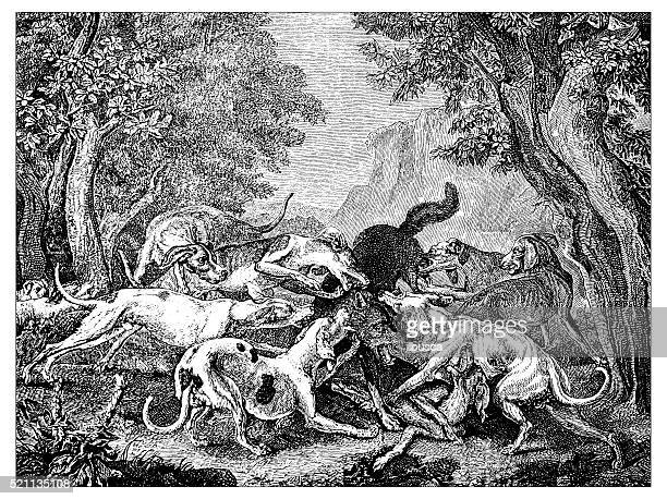 Antique illustration of hunting dogs attacking a quarry