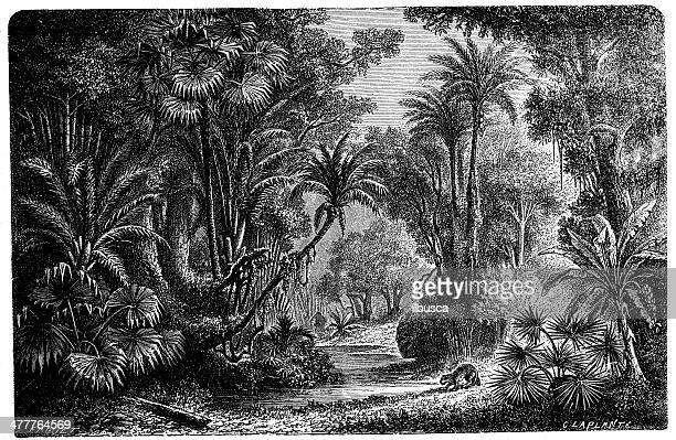 Antique illustration of Indian jungle